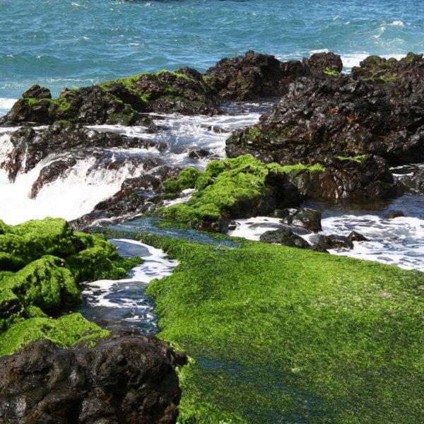 Felsige Küste von von Puerto de la Cruz
