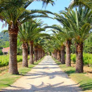 Palmenallee an der Côte d'Azur