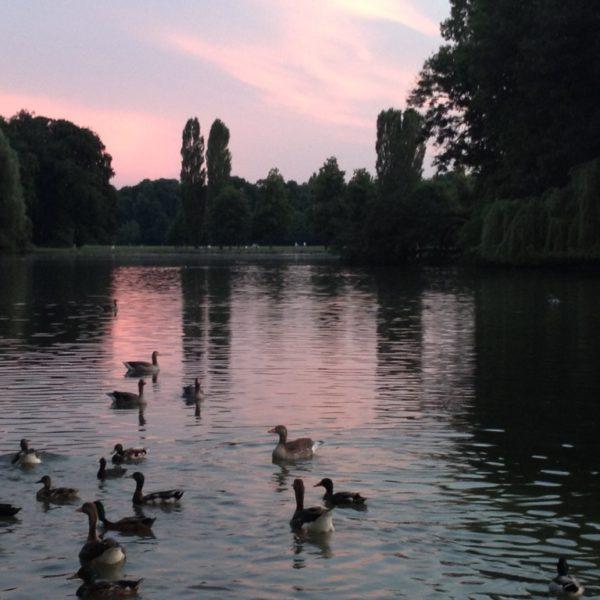 Sonnenuntergang am Kleinhesseloher See im Englischen Garten