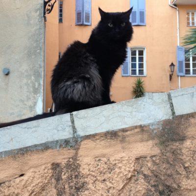 Catcontent - Schwarze Katze auf der Mauer