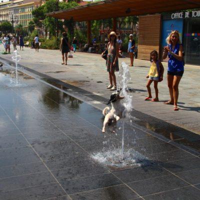 Le Miroir d'Eau auf der Promenade du Paillon - Auch Hunde haben Spaß mit den Wasserstrahlen