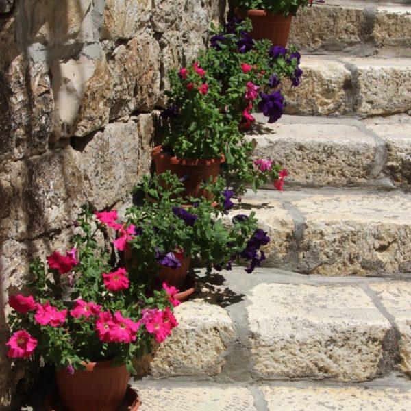 Blumentöpfe auf einer Steintreppe in Dubrovnik