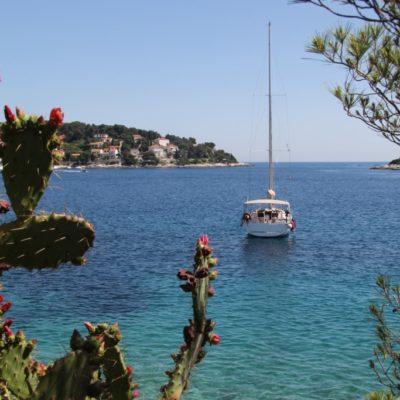 Segelschiff vor der Insel Hvar - Türkisblaues Wasser und blühende Opuntien